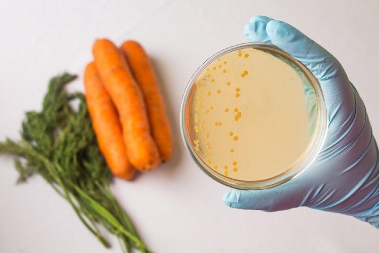 Seguridad alimentaria: ¿en qué consiste?