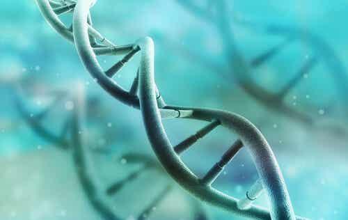 ¿Cómo funciona el ADN?