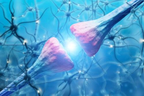 ¿Cómo funcionan las neuronas?