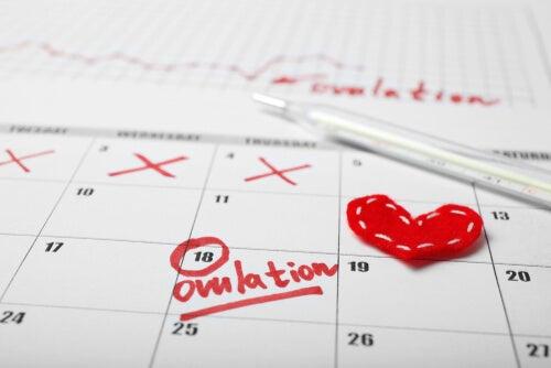 hormonas del ciclo menstrual