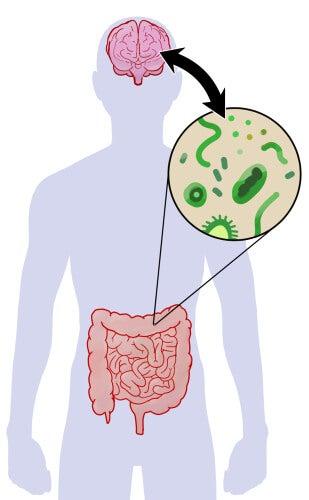 microbiota intestinal en el autismo