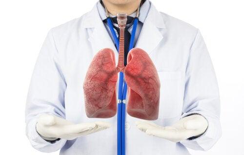 Las fases de la respiración