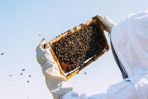 apicultura produce jalea real