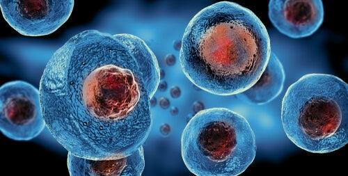 los virus se reproducen en células humanas