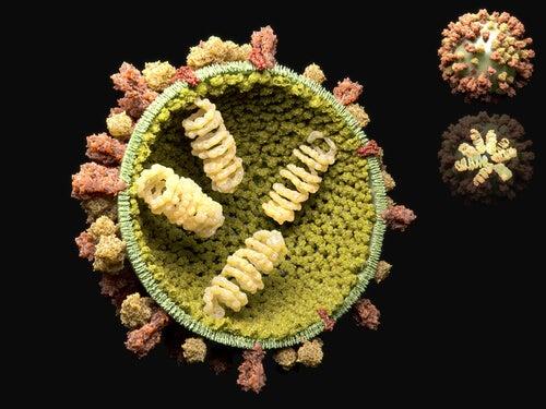 El ciclo reproductivo de los virus