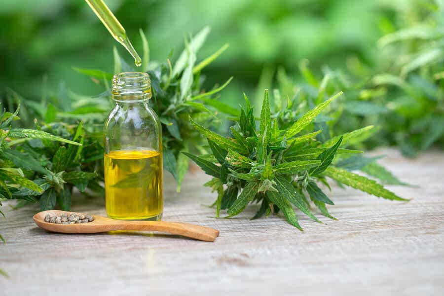La marihuana se extrae de la planta Cannabis sativa, donde el componente más importante es el THC.