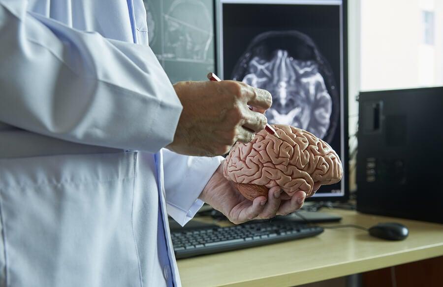 Estudo do cérebro humano