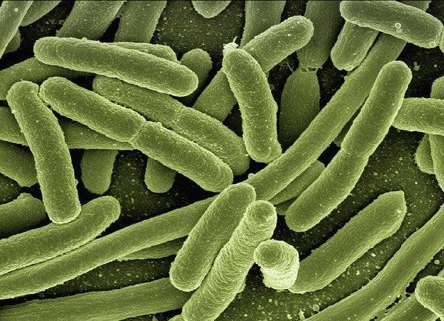 Los fagos para combatir la resistencia a antibióticos