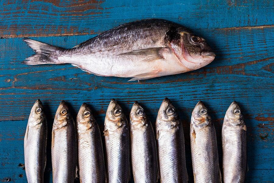 Pescado azul dos veces por semana para las personas mayores