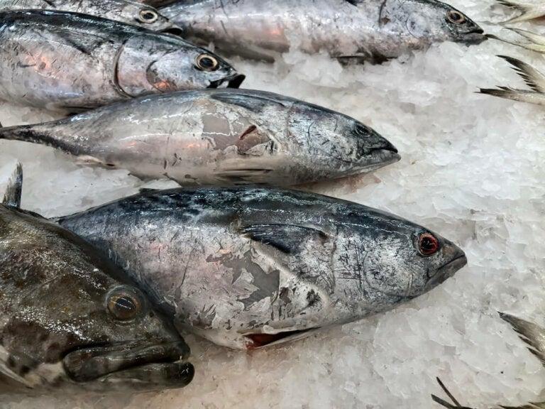 ¿Cómo identificar un pescado en mal estado?