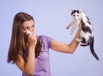 Si tienes alergia a los gatos, esto te interesa
