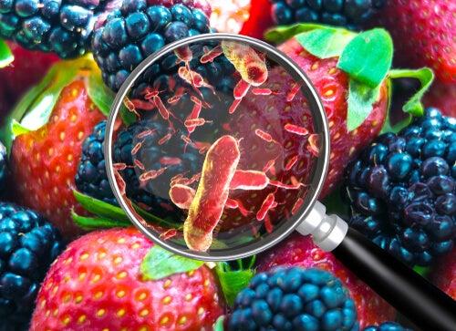 bacterias en los alimentos