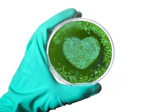 ¿Existen bacterias en el corazón?