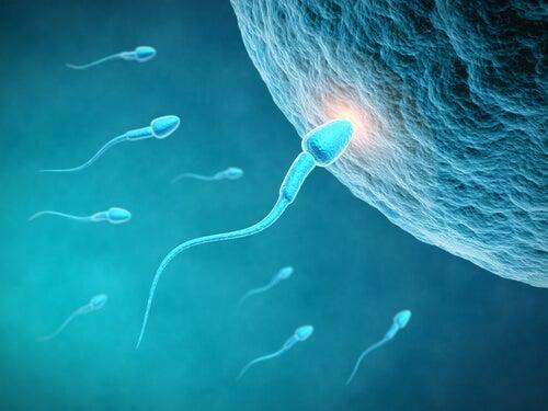 La influencia de la alimentación en el esperma