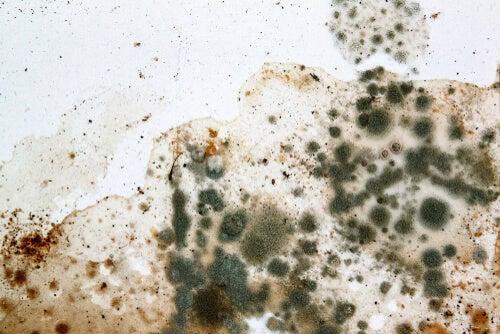 Alergia a los hongos y el moho