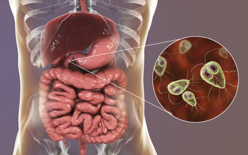 Giardiasis: síntomas y tratamiento