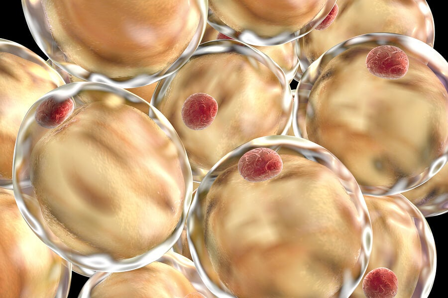 ¿Qué son los lípidos?