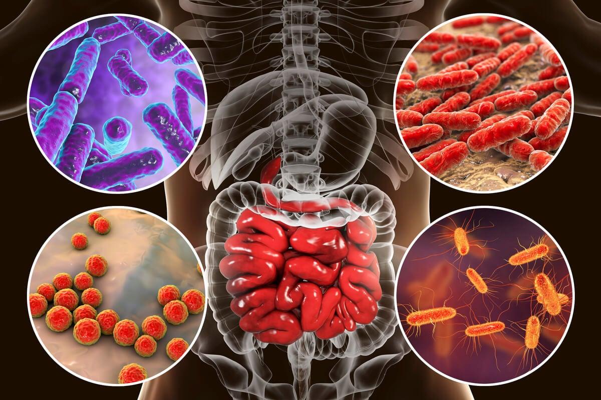 Microbiota del cuerpo humano.