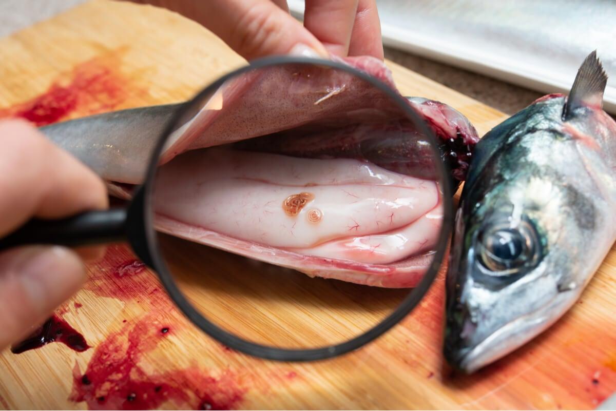 Anisakis en el pescado