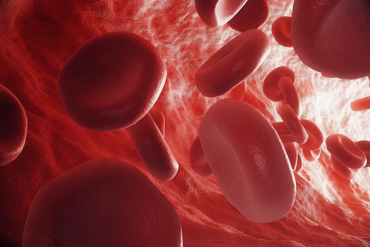 La circulación de la sangre