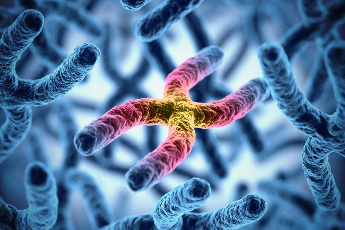 Cromosomas y transmisión genética