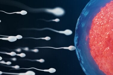 ¿Qué es la inseminación intrauterina y cómo se realiza?