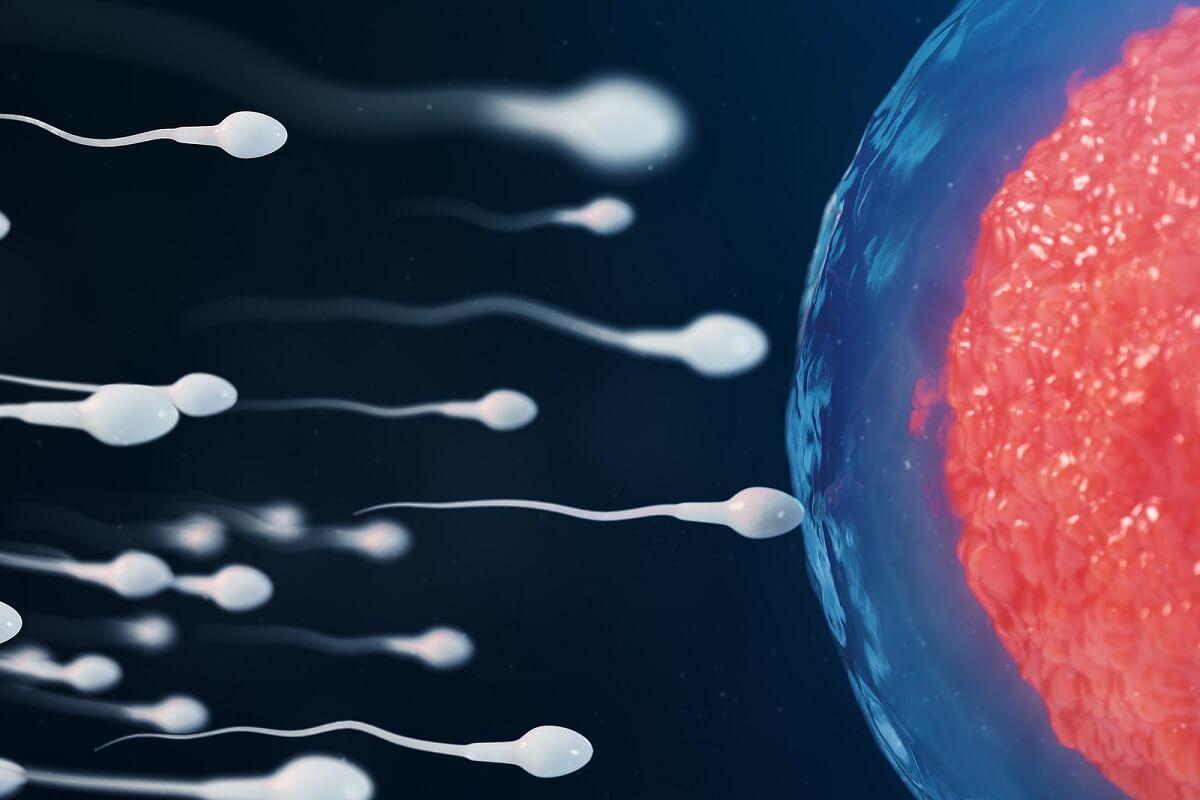 Alimentos y calidad del esperma