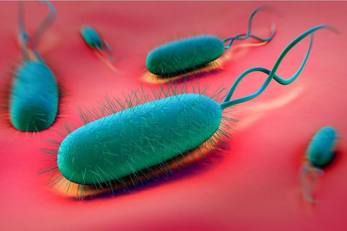 """¿Se pueden prevenir las úlceras gástricas"""""""