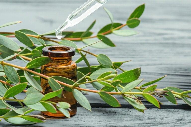 ¿Cuáles son los beneficios de tener eucalipto en la ducha?