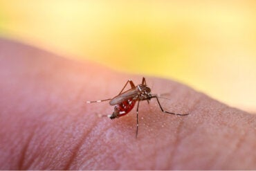 ¿Es el dengue contagioso? ¿Cómo se transmite?
