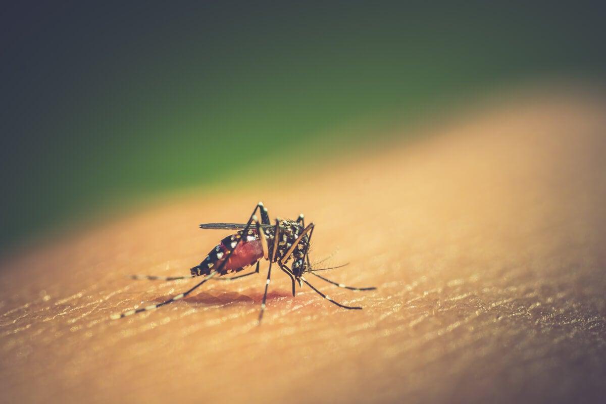Intoxicación por insecticidas: todo lo que debes saber