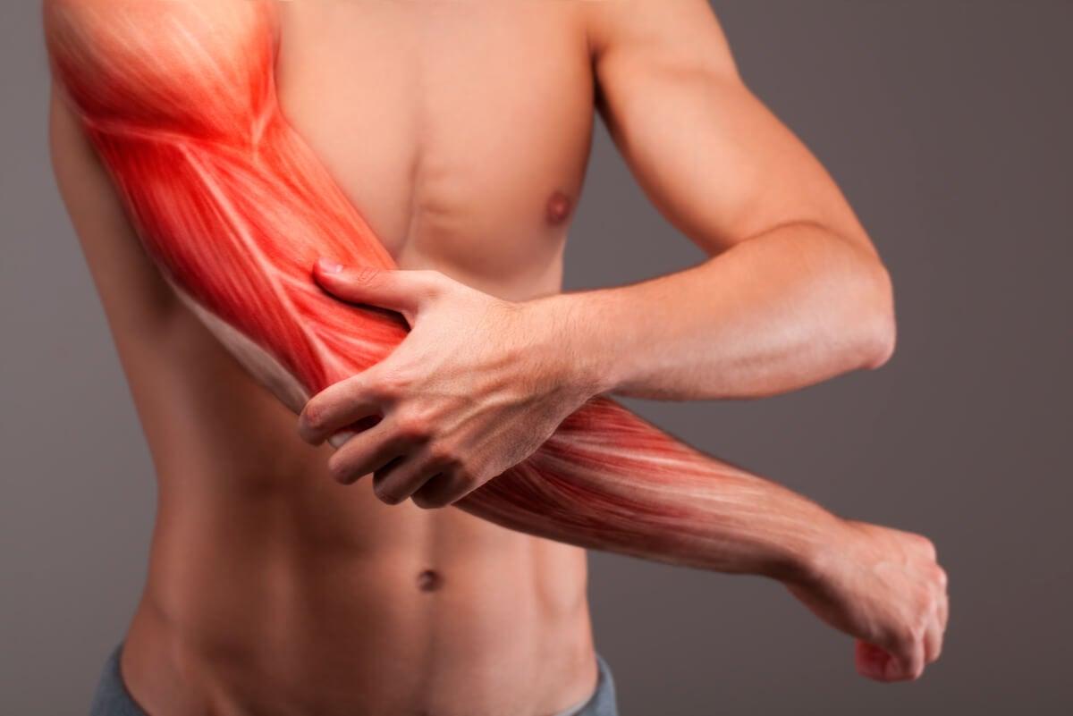 Músculos se forman por proteínas