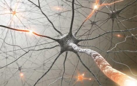 Los pares craneales tienen neuronas.