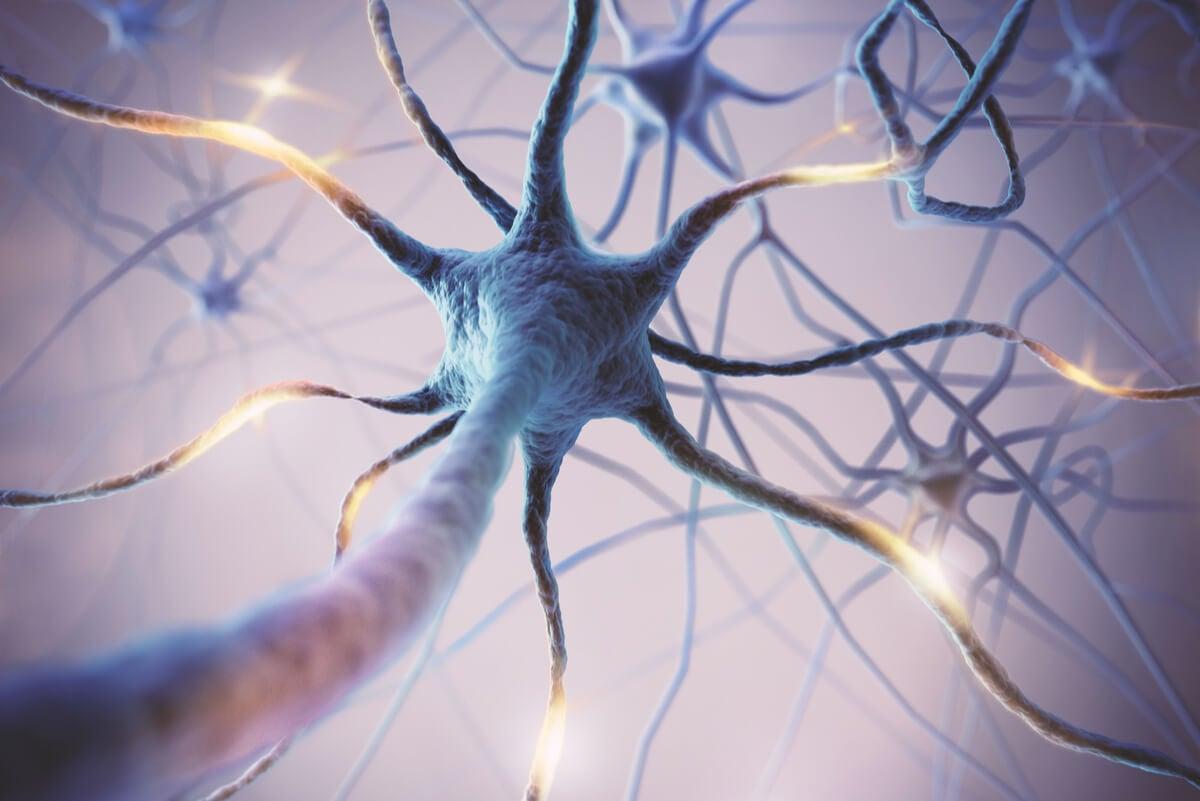 Neuronas se miden por potenciales evocados.