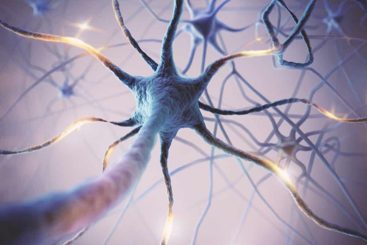 Neuronas crecen por el hongo melena de león.