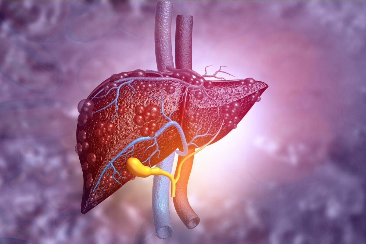 Nuez vómica afecta el hígado.