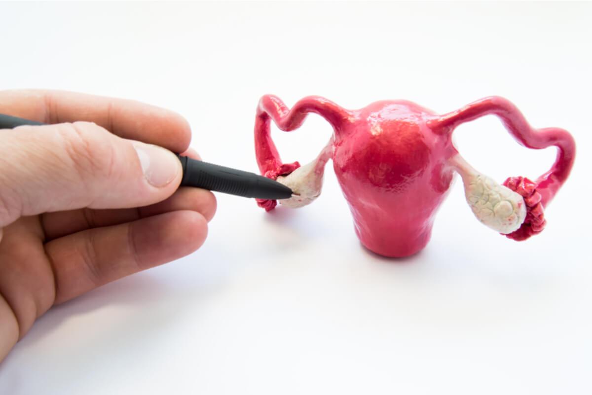 Útero y ovarios