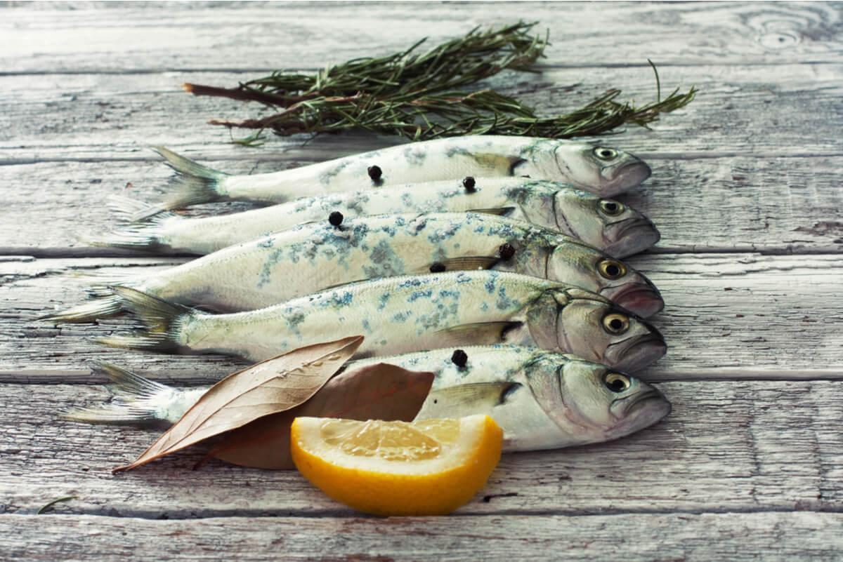 Pescado azul crudo para los ciclos menstruales