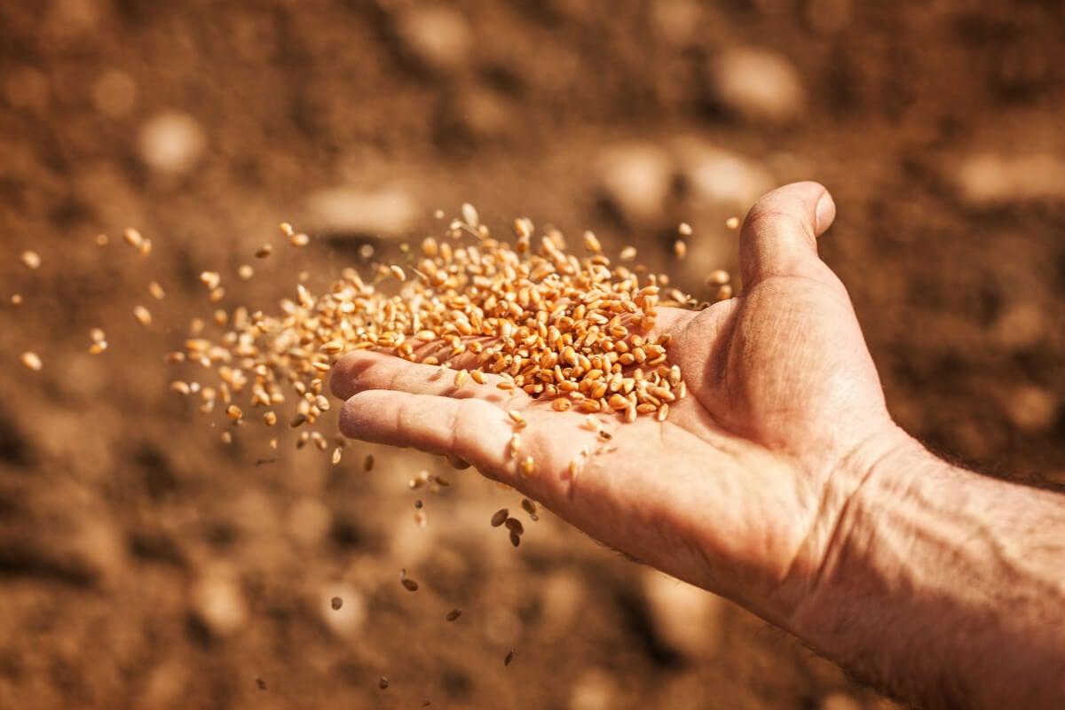 Fitoestrógenos en las semillas