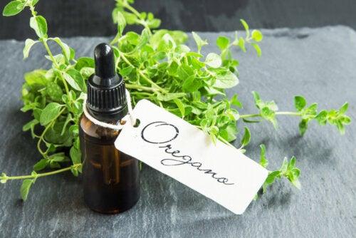 Cómo preparar aceite de orégano casero y cuáles son sus beneficios