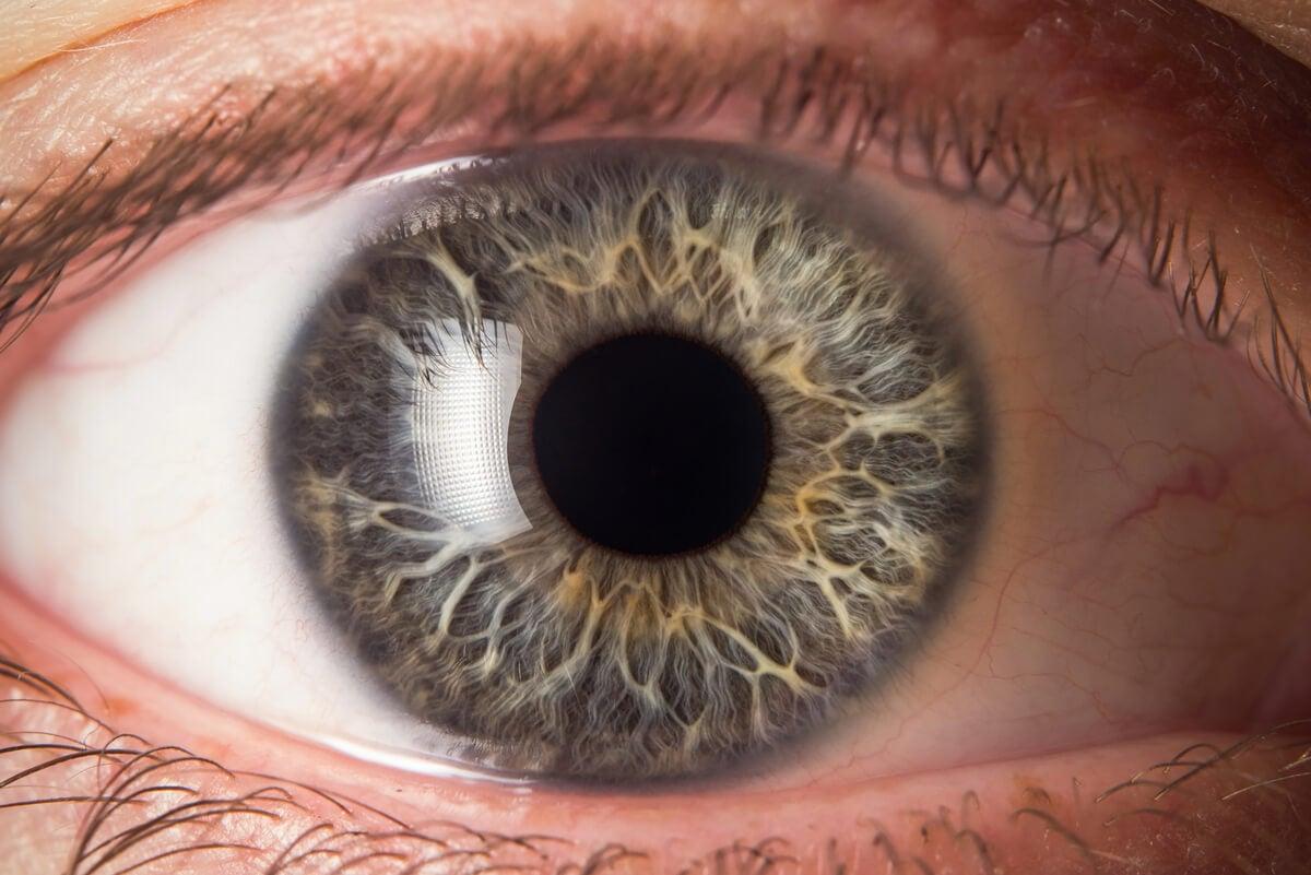 El globo ocular y sus enfermedades