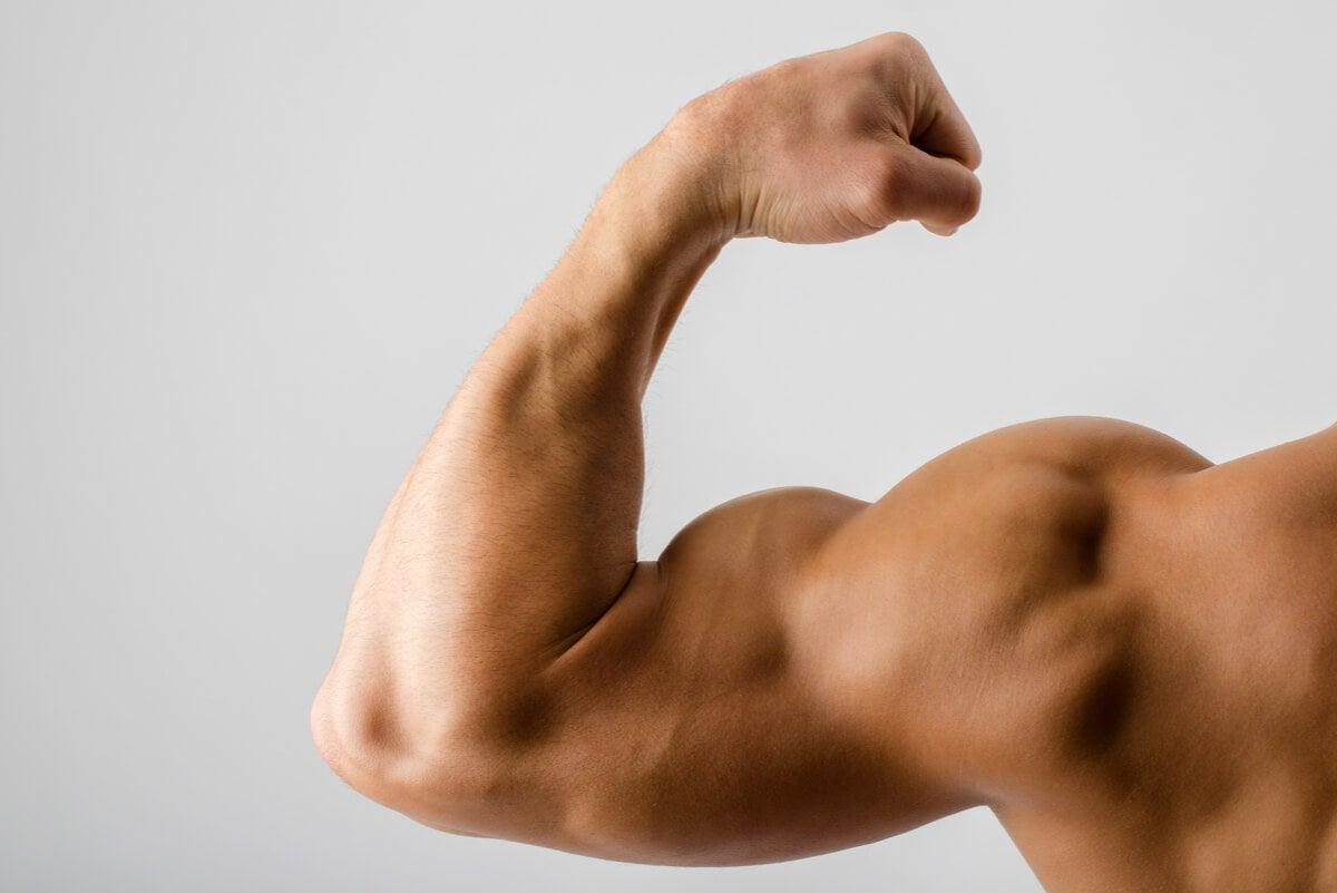 Masa muscular en los brazos.