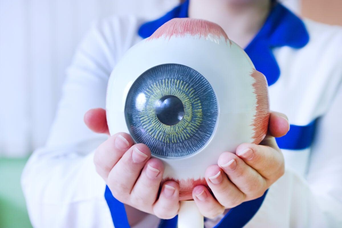 Globo ocular.