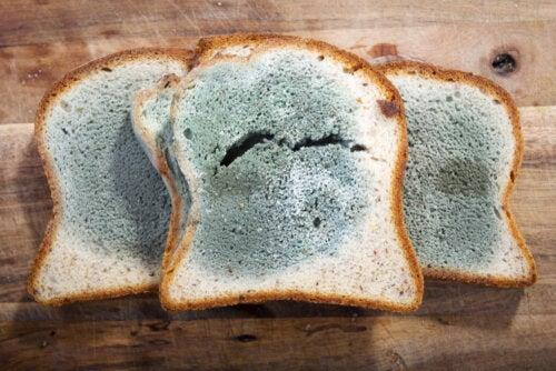 Moho en los alimentos: ¿Cuáles son los riesgos y qué hacer?