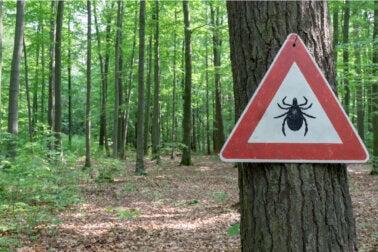 Tratamiento de la enfermedad de Lyme