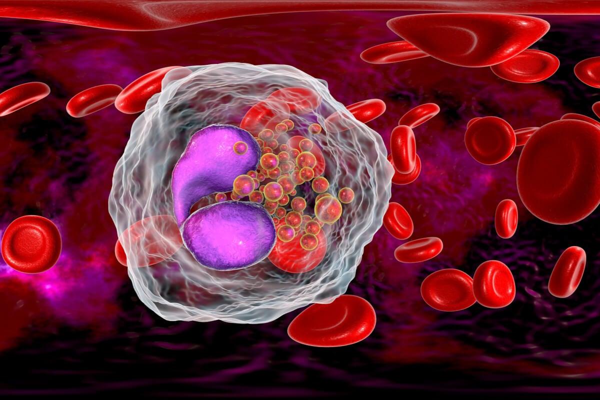 Células del sistema inmune.