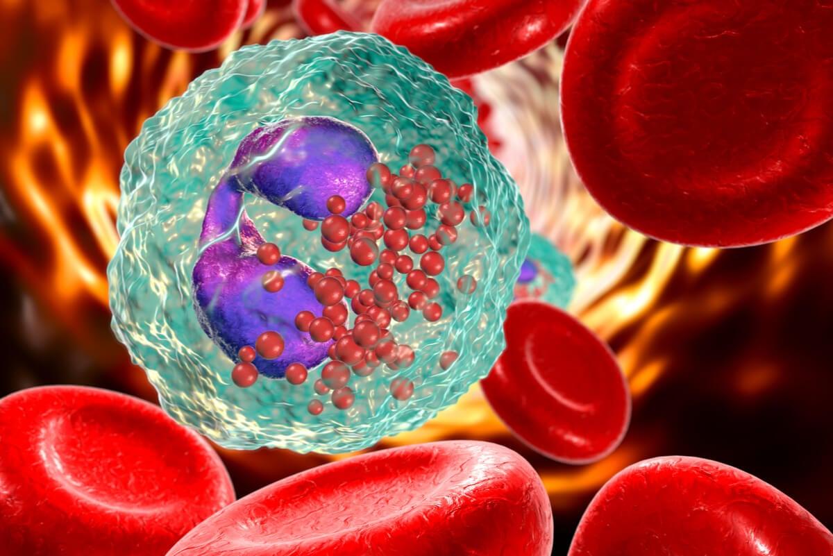 Glóbulos blancos fortalecidos por infusión de perejil.