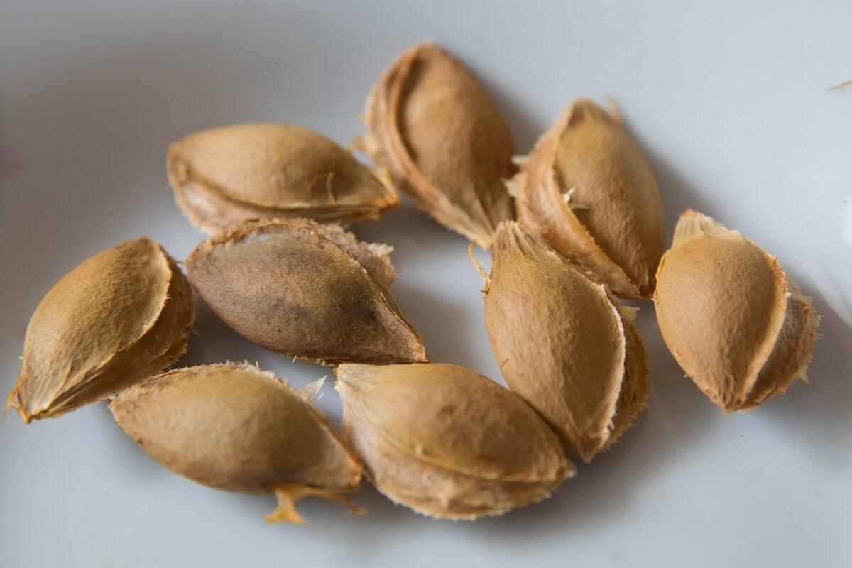 Las semillas de albaricoque