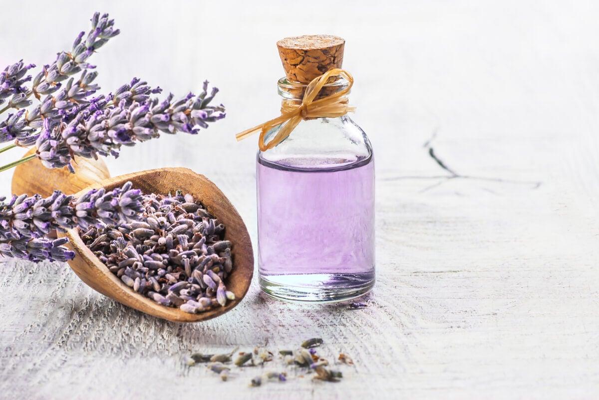 Las 6 mejores plantas medicinales con respaldo científico