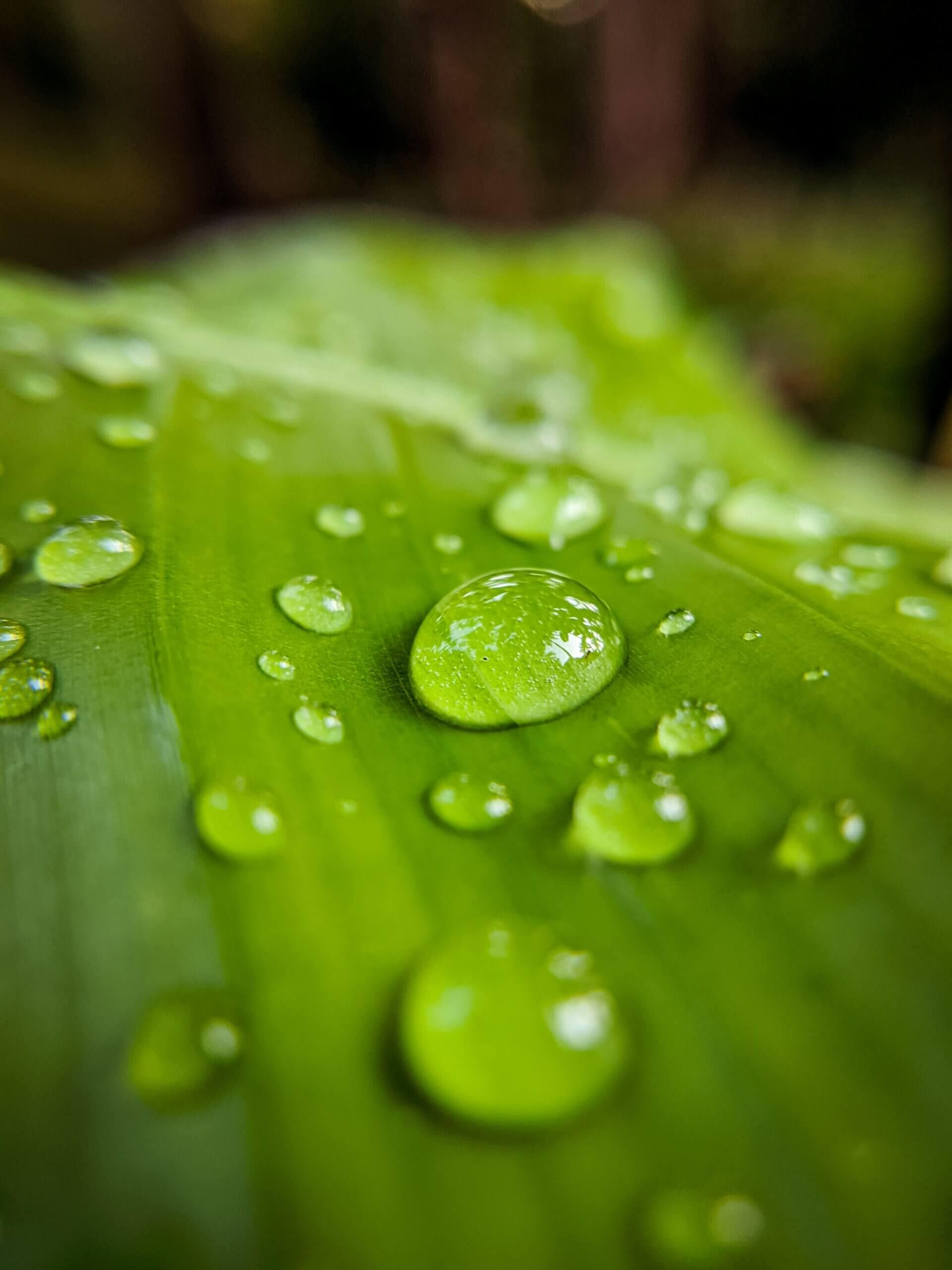 Agua de lluvia para un jardín sustentable.